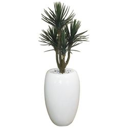 Baby Yucca in Fibreglass Bubble Urn (# 8)