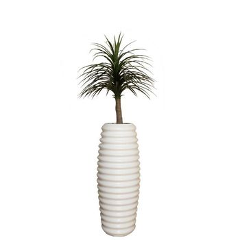 Thin Leave 1.2m Dracaena in Tall Karla (# 6)